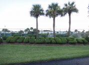 wr-a205-bushes
